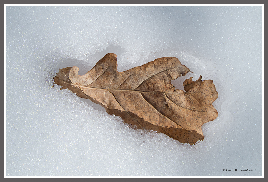 Leaf on snow1